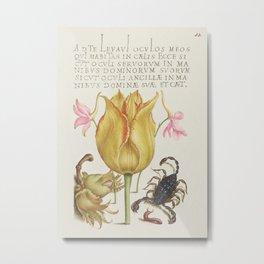 Rocket Larkspurs Tulip Scorpion Millepede and European Filbert from Mira Calligraphiae Monumenta or Metal Print