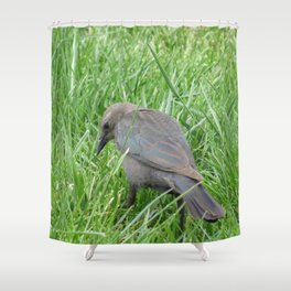 Beautful Little  Bird at Jensen NaturePark Shower Curtain
