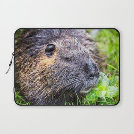Nutria Myocastor Coypus animal close-up in wild nature in french swamps Laptop Sleeve