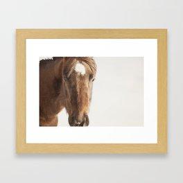 Vintage Style Horse Portrait in Color Framed Art Print