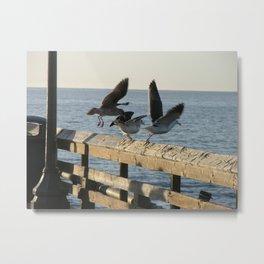 Seagulls taking flight from the pier. Metal Print