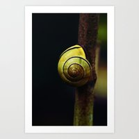 snail Art Prints featuring Snail by LoRo  Art & Pictures