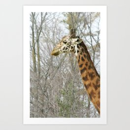 Giraffe Neck Art Print
