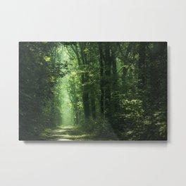 Woodland Glory II Metal Print