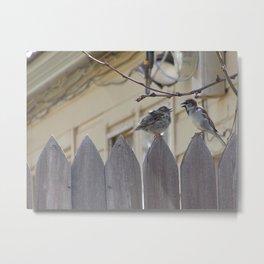 Quarreling Sparrows Metal Print