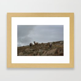 Patriarch of the Rubble Framed Art Print