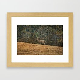 Buck At Pinson Mounds Framed Art Print
