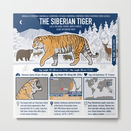The Wild Ones: Siberian Tiger (info) Metal Print