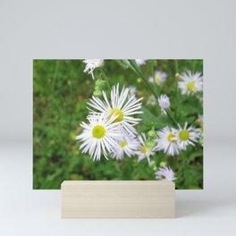 CHAMOMILE FLOWER - (2 of 2) - CLUSTER Mini Art Print