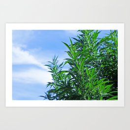 CannaBliss Art Print