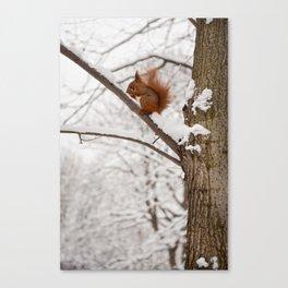 Squirrel sitting on twig in snow Canvas Print