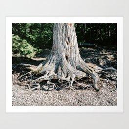 Tree on Beach Art Print
