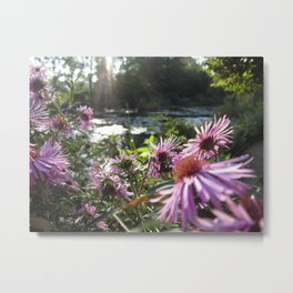 Rays on Monet's Garden Metal Print