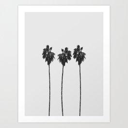 Palm Trees Kunstdrucke