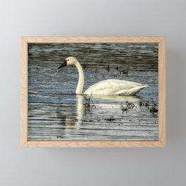 Tundra Swan Framed Mini Art Print