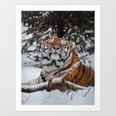 Blissful Tiger Art Print