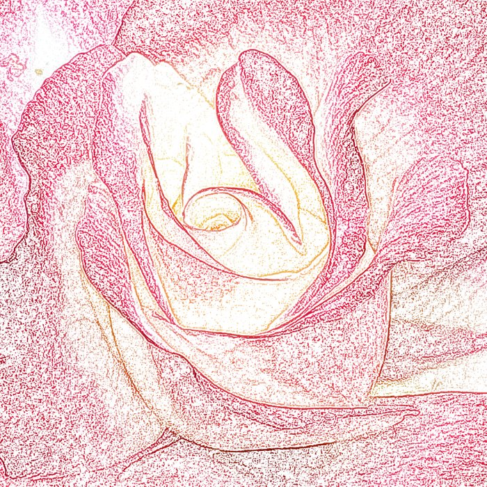 Summer Rose Pencil on White Comforters