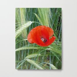 The Red Poppy in the Field Metal Print