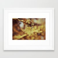spanish Framed Art Prints featuring Spanish moss by  Alexia Miles photography