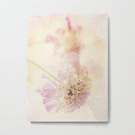 Soft Pink Metal Print