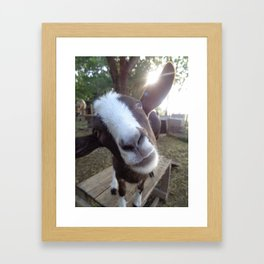 Goat Barnyard Farm Animal Framed Art Print