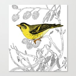 Technicolour Siskin Canvas Print