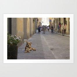 Cane, Distretto di Oltrarno, Firenze Art Print