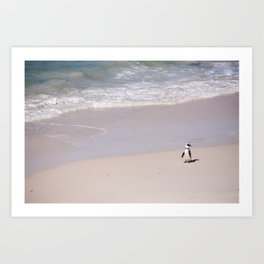 Lone African Penguin on Cape Town beach Art Print