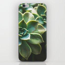 Botanical Gardens II - Succulents #423 iPhone Skin