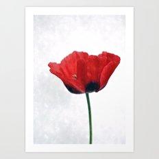 Watercolour Poppy Art Print