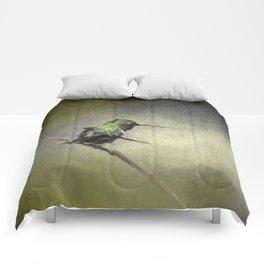 Feeling Frisky - Hummingbird Comforters