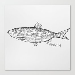 Herring Canvas Print