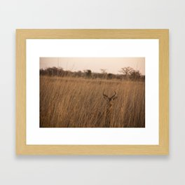 Antelope Kob in Benin, Africa Framed Art Print