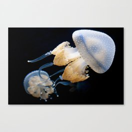 Jellyfish Swimming - Underwater Photography Canvas Print