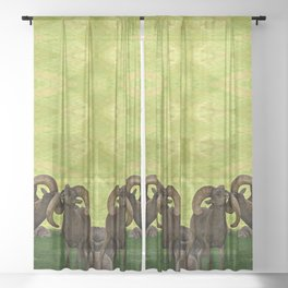 Entangled Horns - Desert Bighorn Rams Sheer Curtain