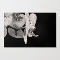 Orchid in Profile Canvas Print