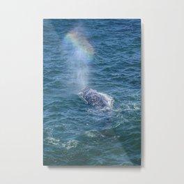 Grey Whale Spouting Rainbows Metal Print