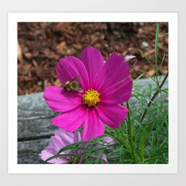 Coreopsis Flower with Bee Art Print