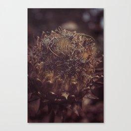 Dead Flower Canvas Print