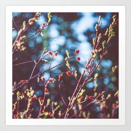 Berries at the Lake  Art Print