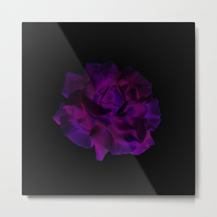 Ultra Violet Velvet Rose loves Black Metal Print