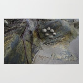 Collection of Limpets on Coastal Rocks Rug