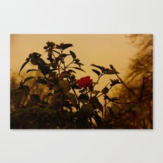 Winter rose Canvas Print