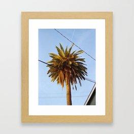 Venice Palm Framed Art Print