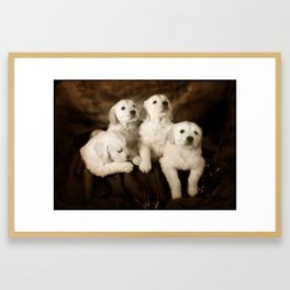 Cute labrador puppies Framed Art Print