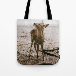 Nara, Japan Deer Fawn Tote Bag