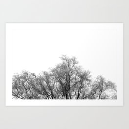 A tree and his crown in winter II Art Print