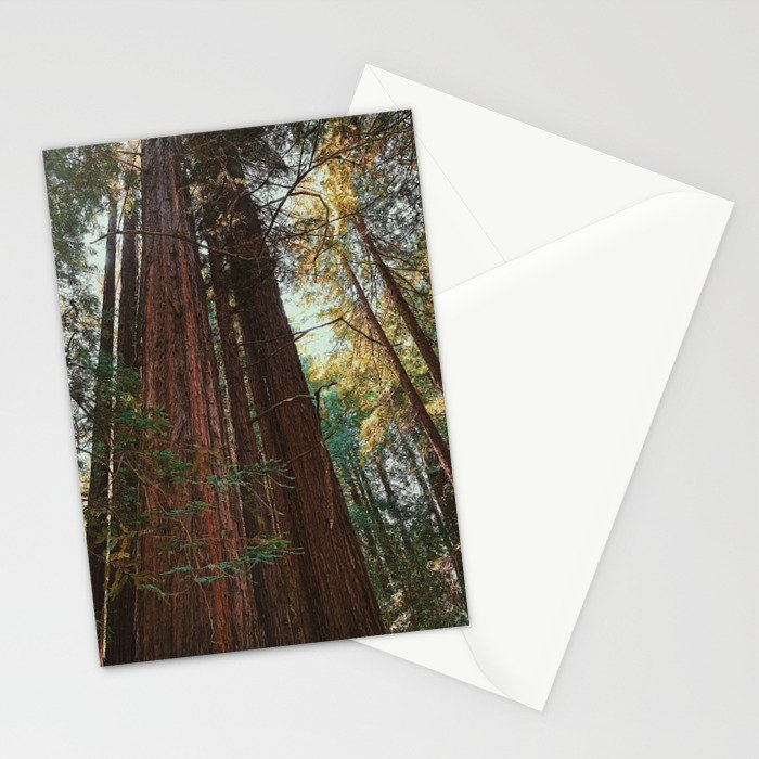 Redwood Trees Stationery Cards