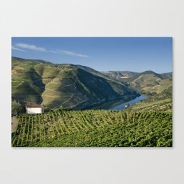 Vineyards in the Douro Valley, Portugal Canvas Print