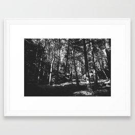 Up in the Woods / Boulder, CO Framed Art Print